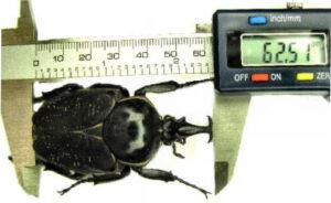 mesurage-insectes