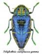 polybothris-sumptuosa-gemma-female