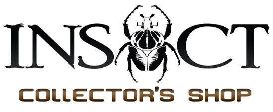 Insect collector's shop | Collectionneur d'insectes