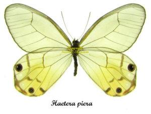 haetera-piera