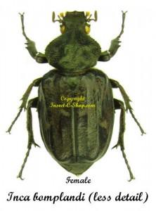 inca-bomplandi-less-female
