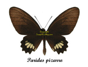 parides-pizarro