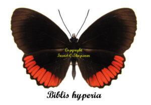 biblis-hyperia-1