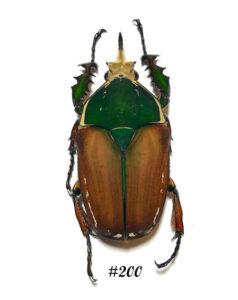 bug-200