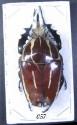 bug-057
