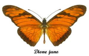 dione-juno
