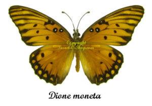 dione-moneta